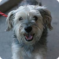 Adopt A Pet :: Shy - Canoga Park, CA