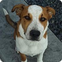 Adopt A Pet :: Zane - West Richland, WA
