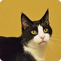 Adopt A Pet :: Sawyer - Ocean City, NJ