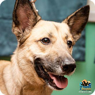 German Shepherd Dog Mix Dog for adoption in Evansville, Indiana - Shadow