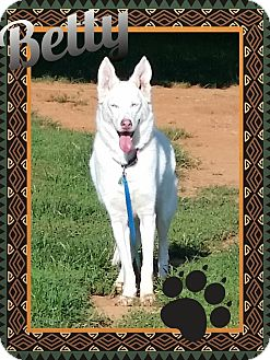 German Shepherd Dog/Husky Mix Dog for adoption in Stuart, Virginia - Betty White