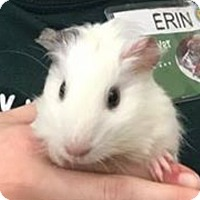 Adopt A Pet :: McGoo - Marlton, NJ