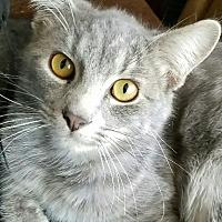 Adopt A Pet :: Luna - Monrovia, CA