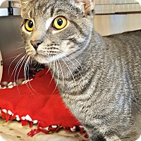 Adopt A Pet :: Miller - Chesapeake, VA