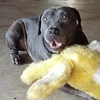 Adopt A Pet :: Bindi - Bunnell, FL