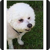 Adopt A Pet :: Adopted!! Rocky - TX - Tulsa, OK