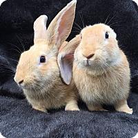 Adopt A Pet :: Peeves & Ginny - Watauga, TX