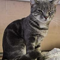 Adopt A Pet :: Tia - Pompton Plains, NJ
