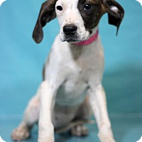 Adopt A Pet :: Oshawa - Waldorf, MD