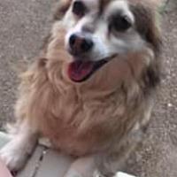 Adopt A Pet :: Midget - Providence, RI