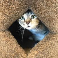 Adopt A Pet :: Miranda - Barco, NC