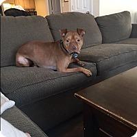 Adopt A Pet :: Zeus 2 (COURTESY POST) - Baltimore, MD