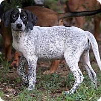 Adopt A Pet :: Hufflepuff - Burbank, OH