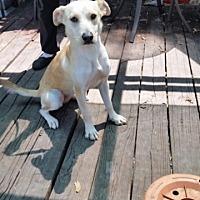 Adopt A Pet :: Sky - Pipe Creek, TX