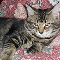 Adopt A Pet :: Pippi (+Fidgie) - Richmond Hill, ON