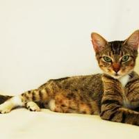 Adopt A Pet :: Penelope - Toccoa, GA