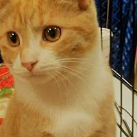 Adopt A Pet :: Andy - Columbus, OH