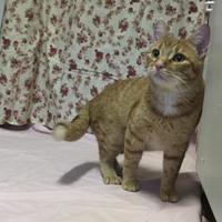 Adopt A Pet :: sam - Belleville, ON