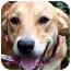 Photo 4 - Nova Scotia Duck-Tolling Retriever/Labrador Retriever Mix Dog for adoption in Pawling, New York - HEATHER