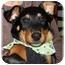 Photo 2 - Rottweiler Mix Puppy for adoption in Okotoks, Alberta - Cashew