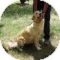 Adopt A Pet :: Dana - Denver, CO
