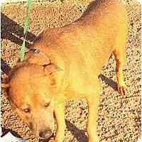 Adopt A Pet :: Harry&William, FL - Miami Beach, FL