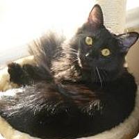 Adopt A Pet :: Quincy - Prescott, AZ