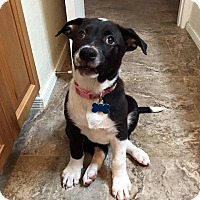 Adopt A Pet :: PAGE - Gilbert, AZ