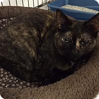 Adopt A Pet :: Trina Aaliya - Byron Center, MI