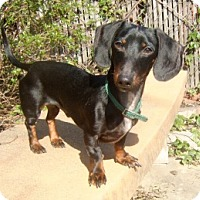 Adopt A Pet :: Frankie - Forest Ranch, CA