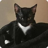Adopt A Pet :: Keanu - Encinitas, CA
