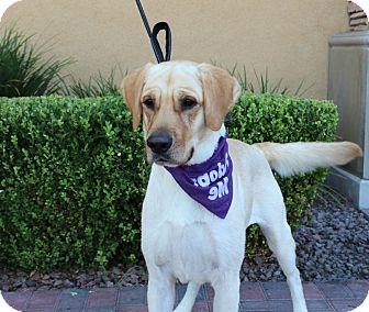 Labrador Retriever Dog for adoption in Las Vegas, Nevada - HANK RYAN