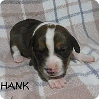 Adopt A Pet :: Hank - Batesville, AR