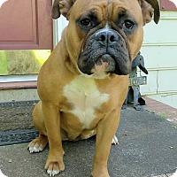 Adopt A Pet :: Betty - Lawrenceville, GA