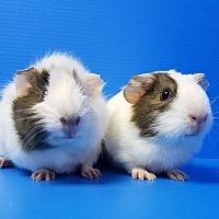 Adopt A Pet :: Zoe and Miranda - Lewisville, TX
