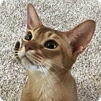 Adopt A Pet :: Cassidy - Davis, CA