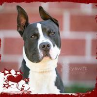Adopt A Pet :: AC - Ramzi - Fallston, MD