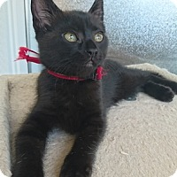Adopt A Pet :: Octavia - Vancouver, BC