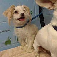 Adopt A Pet :: URGENT on 8/25 SAN BERNARDINO - San Bernardino, CA