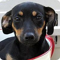 Adopt A Pet :: Baby Liesl - Oakley, CA