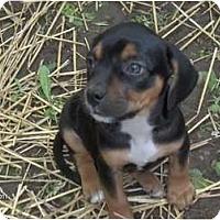 Adopt A Pet :: Roxy - Clayton, OH