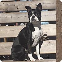 Adopt A Pet :: Furgus - Hamilton, ON