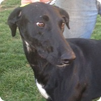 Adopt A Pet :: Flecha - Ogden, UT