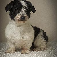 Adopt A Pet :: Tucker Lynn - Davie, FL