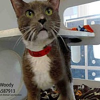 Adopt A Pet :: WOODY - Long Beach, CA