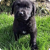 Adopt A Pet :: Bentley - Treton, ON