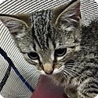 Adopt A Pet :: Angela - Medina, OH