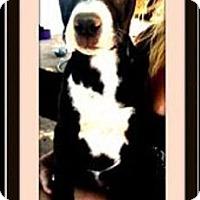 Adopt A Pet :: April - Murrieta, CA