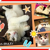Adopt A Pet :: CARLY - Mooresville, NC