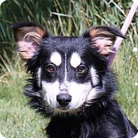 Adopt A Pet :: **PINKIE** - Mukwonago, WI